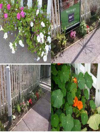 Coulsdon South Project flowers - Sept 2014.jpg